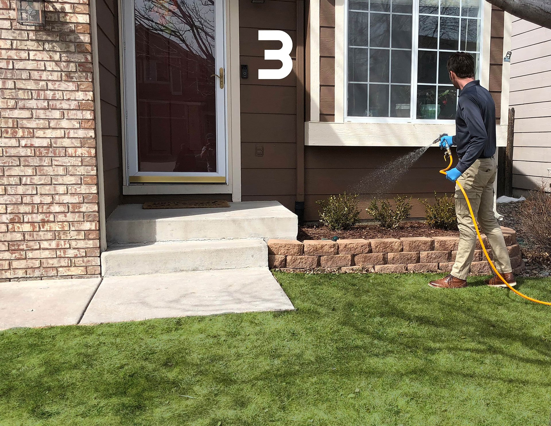 Earwig Pest Control Services